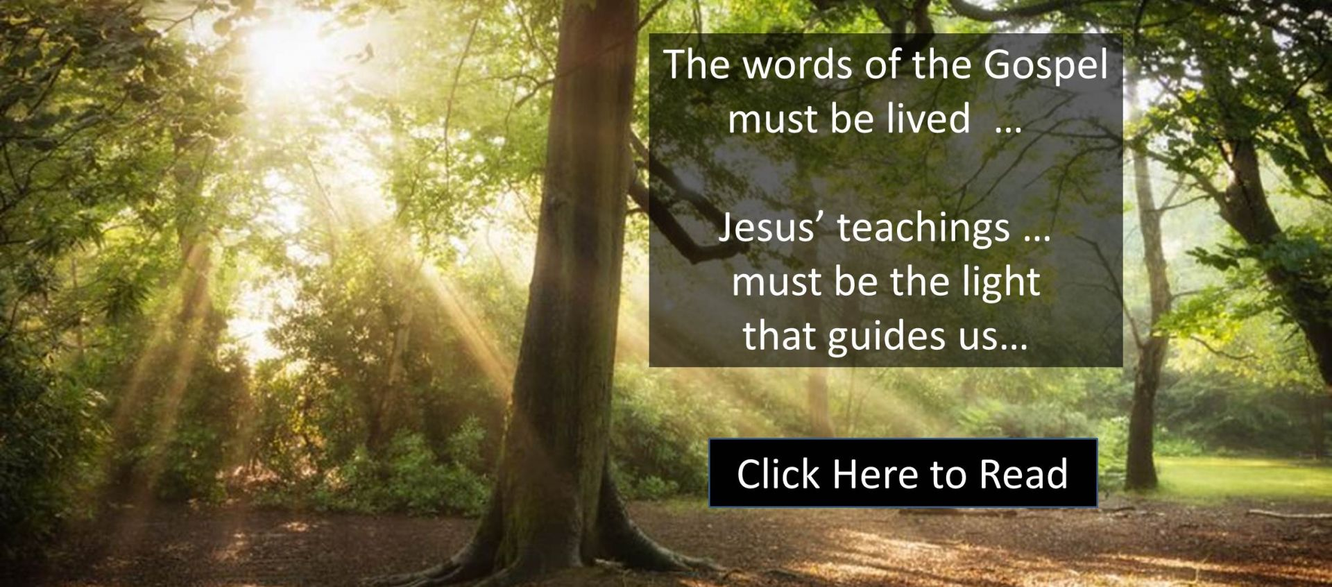 Gospel Reflection  - Which of the two did the Father's will?