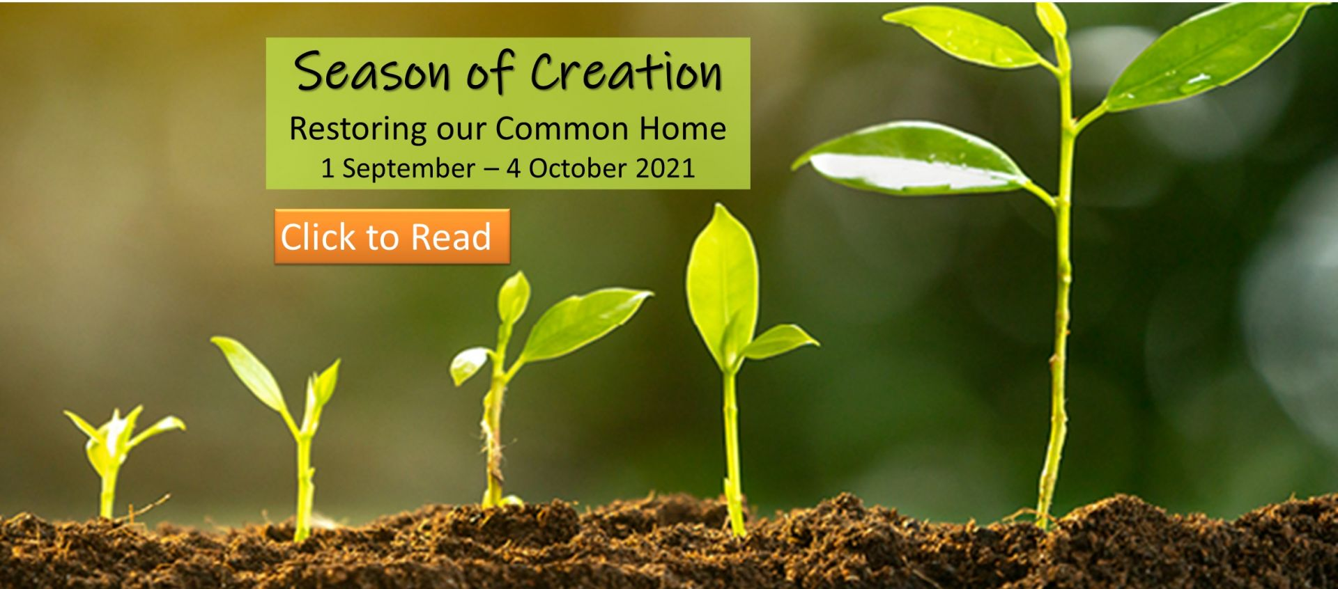 Season of Creation and PAtrola Letter from Archbishop Dermot Farrell